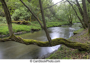 tree with moss on the River