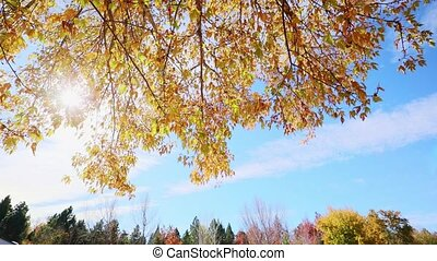 Multi colored tree leaves in autumn on sunny sky, high dynamic range video capture hdr