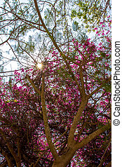 Tree with pink flower on the sky background