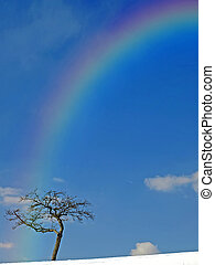 Tree with rainbow in wintertime