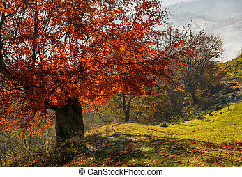 tree with red leaves on hillside with fallen leaves on...