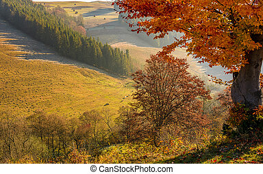 tree with red leaves on hillside with spruce forest in a...