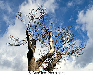 Tree with sky background