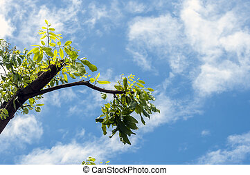 tree with sky clouds background