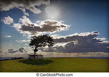 Tree with sun at Cleeve Hill on a windy day, Cotswolds,...