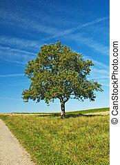 tree with way