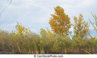 Tree with yellow autumn leaves on the shore of a small lake