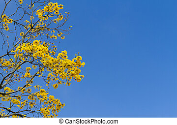 tree with yellow flowers under blue sky