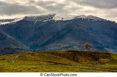 tree with yellow foliage in mountains. landscape of mountain...