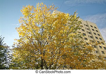 tree with yellow foliage on the background of a modern building
