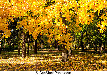 tree with yellow leaves in autumn