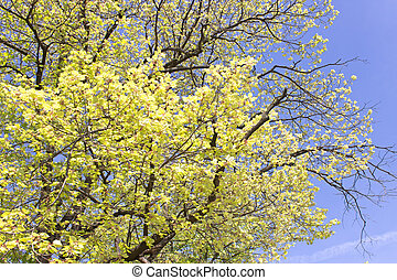 Tree with yellow leaves over blue sky