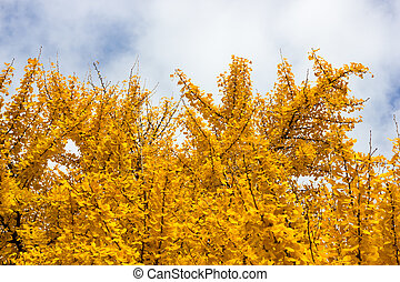 Tree with yellow leaves