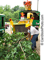 Tree company is clearing tree limbs from around power wires ,worker feeding chipper machine