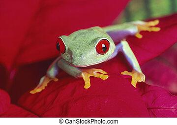 treefrog, 赤い目をしている