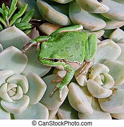 Treefrog on plant