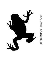Treefrog silhouetted on white background with clipping part