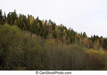 Treeline Slope
