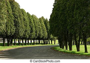 treelined, straat