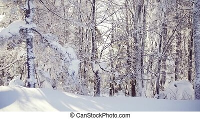 trees, хвойный, winter., лес, snow-covered
