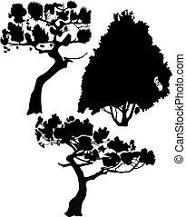 Trees a fur-tree a pine