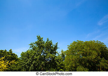 Trees against a blue sky