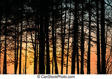 Trees against the Gulf of Finland at evening.