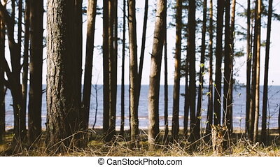 Trees against the Gulf of Finland. Springtime video.