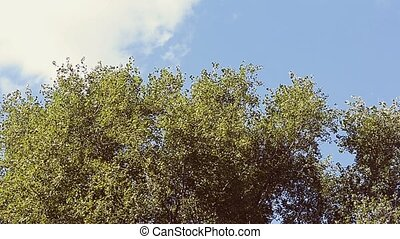 Trees against the sky