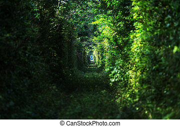Trees alley