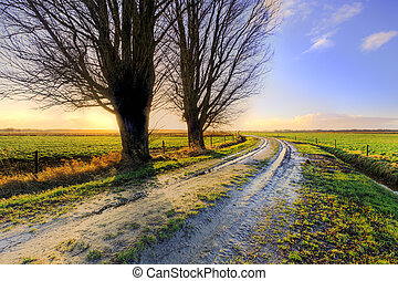 Trees along a lane at sunset in Holland