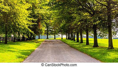 Trees along a rural backroad in York County, Pennsylvania. -...
