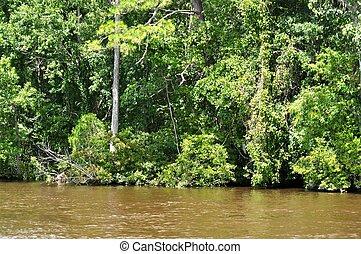 Waccamaw River - Trees along the bank of the Waccamaw River