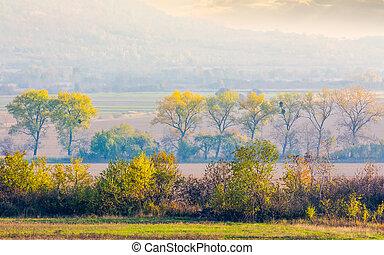 trees along the rural fields in morning haze. lovely...