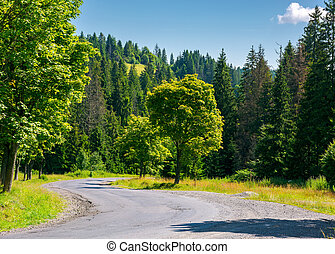 trees along the winding road. lovely nature scenery in...