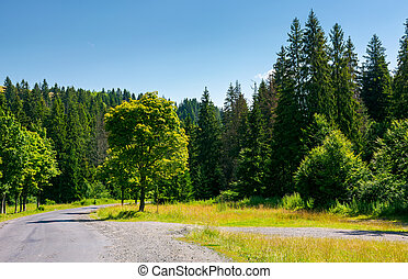 trees along the winding road through forest. lovely nature...