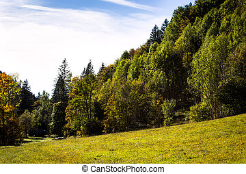 Trees and a field in the black forest area, autumn season