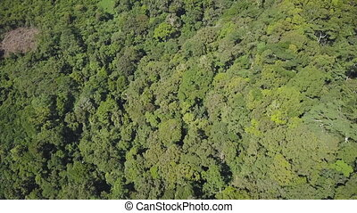 Trees and a river - A birds eye view shot of river and...