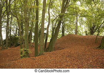 Trees And Autumn Leaves In Forest