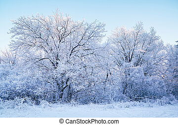 Trees and bushes in a beautiful white frost on blue sky background. Winter forest in the snow