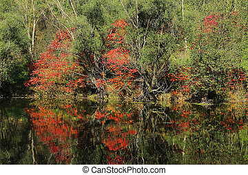Trees and bushes on bank of pond