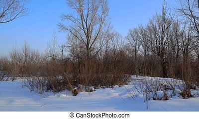 Trees and bushes without leaves in winter forest