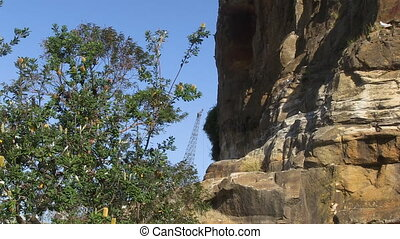 Trees and cliff shot - A full shot of trees and a cliff with...