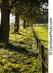 Trees and fence in country in fall