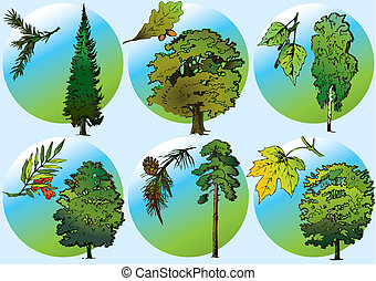 Trees and foliage.