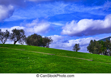 Trees and grass field with blue sky