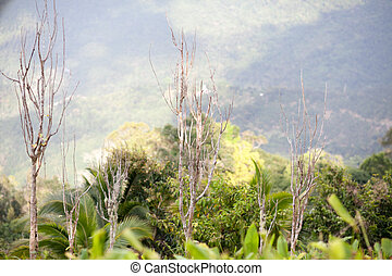 trees and grass in a tropical rain forest