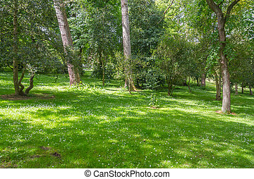 Trees and grass in Botanic Garden