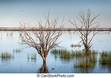 Trees and grasses swamped in outback lake oasis