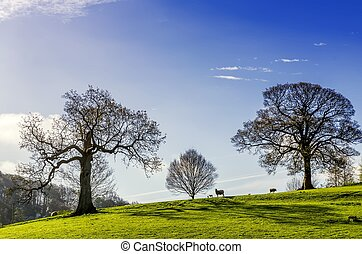 Trees and grazing sheep on an English Spring day.